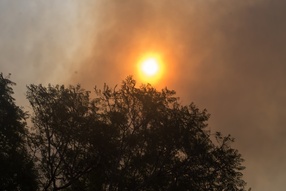 The Australian Fires: How You Can Help