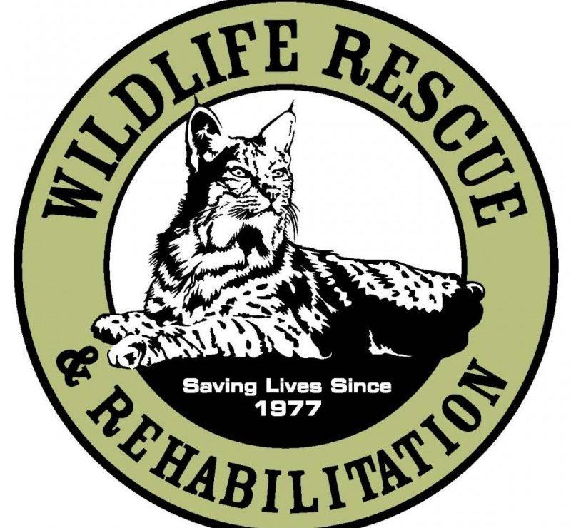 Wildlife Rescue and Rehabilitation Inc.